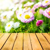 Spring Background Daisies Wooden Panel