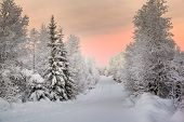 winter landscape in Lapland