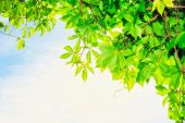 Постер, плакат: Летние листья