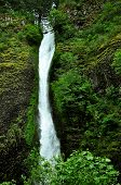 picture of horsetail  - Horsetail Falls in Oregon - JPG