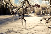 stock photo of icicle  - Icicles on trees after an extreme icestorm.
