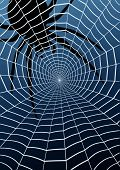 stock photo of spider web  - Editable vector illustration of a spider and web - JPG