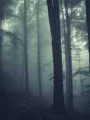 Dark coniferes forest with thick fog