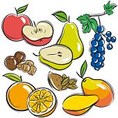 Set Of Fruits, Apple, Pear, Mango, Orange,  Vector