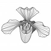 Exotic Orchid Drawing