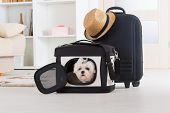 image of maltese  - Small dog maltese sitting in his transporter or bag and waiting for a trip - JPG
