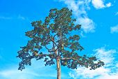 Tree And Blue Sky Background