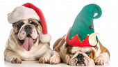 picture of christmas dog  - christmas dogs dress like santa and and elf  - JPG