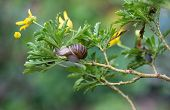 Snail In A Bush