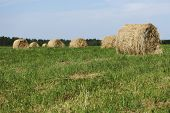 hay on field under blue sky