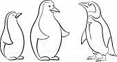 Emperor penguins, contours