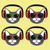 funny cats in music  headphones and dark glasses