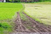 tractor tracks in the green field