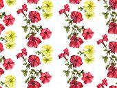 Watercolor petunia pattern