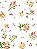 Watercolor rowan background