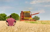 picture of threshing  - Proud peasant standing on field with combine in background - JPG