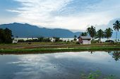 picture of west village  - Rice fields near Lake Maninjau - JPG