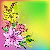 Flower background, lily and mine