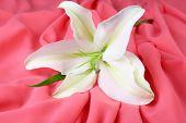 Beautiful lily on fabric background