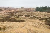 picture of dune grass  - Dune landscape in Skagen Denmark with beech grass - JPG