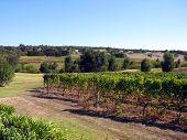 Margaret River wijngaard