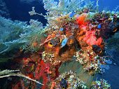 foto of squirt  - The surprising underwater world of the Bali basin - JPG