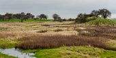 stock photo of marshlands  - Coalhouse fort Tilbury Essex viewed across marshland - JPG