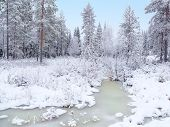 Frozen swamp in the winter forest.