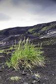 Grass Colonising A Bleak Lava Landscape