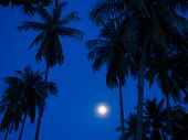 Palm Trees under the moonlight and starry sky