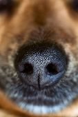 picture of animal nose  - Dog snout - JPG