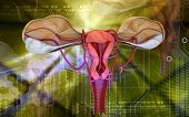 image of ovary  - Digital illustration of  Uterus  in  colour  background - JPG