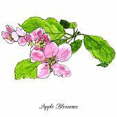 stock photo of cherry trees  - spring flowers of apple tree - JPG