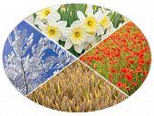 picture of fall-wheat  - four seasons circle I  - JPG
