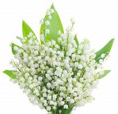 foto of lilly  - lilly of the valley posy with green leaves close up  isolated on white background - JPG