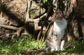 picture of dapple-grey  - Tri color house cat sitting in dappled light - JPG