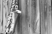 picture of lonely  - Lone old saxophone leans against wooden fence outside jazz club - JPG