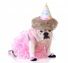 pic of birthday hat  - birthday dog  - JPG