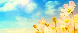image of garden-art  - art beautiful summer garden flowers; summer or autumn background ** Note: Shallow depth of field - JPG