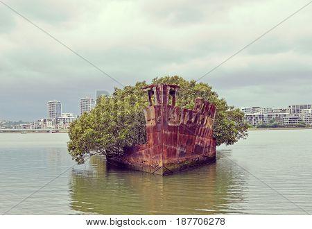 Mangrove trees growing