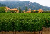 Napa Valley vineyard California