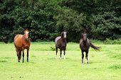 Três cavalos