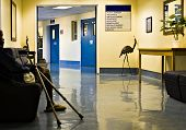stock photo of crotch  - young African American with crotches waiting on the hospital hallway healthcare - JPG
