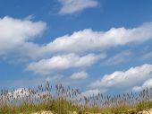 Coastal Summer Tranquility