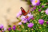 stock photo of butterfly flowers  - a colourful butterfly on a yellow flower