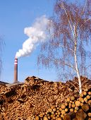 Wood in front of a biomass power plant in Germany