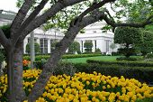 Windows Of The Oval Office, The Office Of The Us President, In The West Wing Of The White House