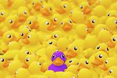 Unique Purple Toy Duck Among Many Yellow Ones. Standing Out From Crowd, Individuality And Difference poster