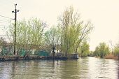 Flooded Trees In The Green Meadow Over The Banks Of The Danube River In Early Spring.  Danube Natura poster