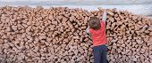 Boy Collecting Firewood. Wood Burned As Fuel. Firewood Stacked Along The Wall. Natural Living. Cutti poster